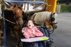Sidney-bij-paarden