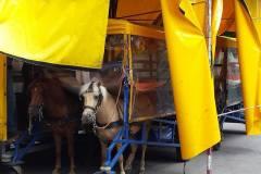 Paarden-met-trailer