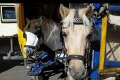 thumbs_2-paarden